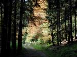 forest-dark-road_w725_h544